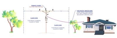 Tree Clearance Diagram