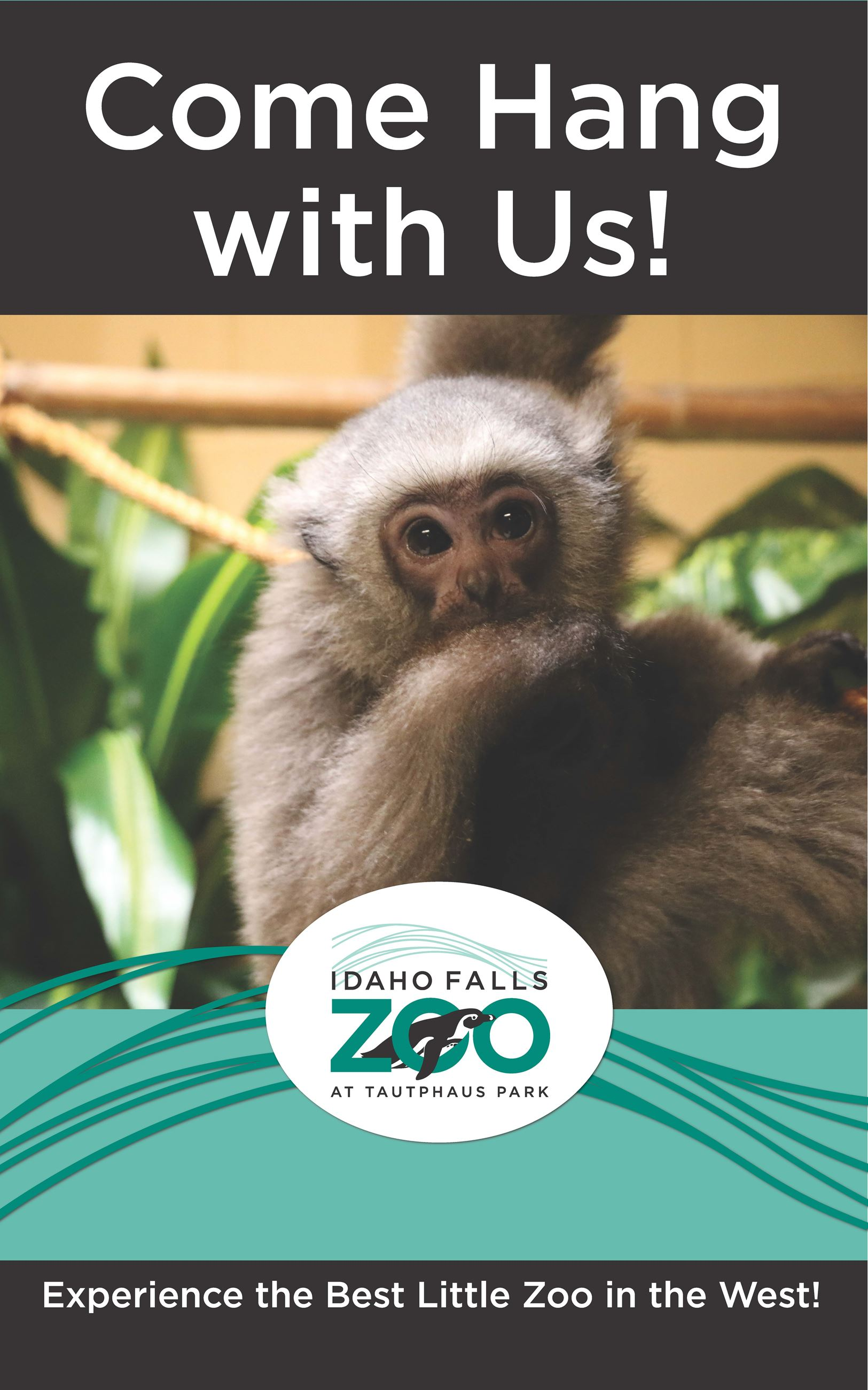 2018-Zoo-Poster