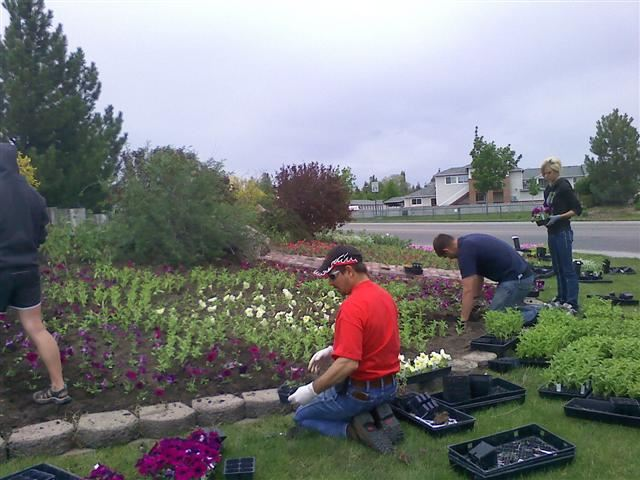 Four people planting flowers in a flower bed.