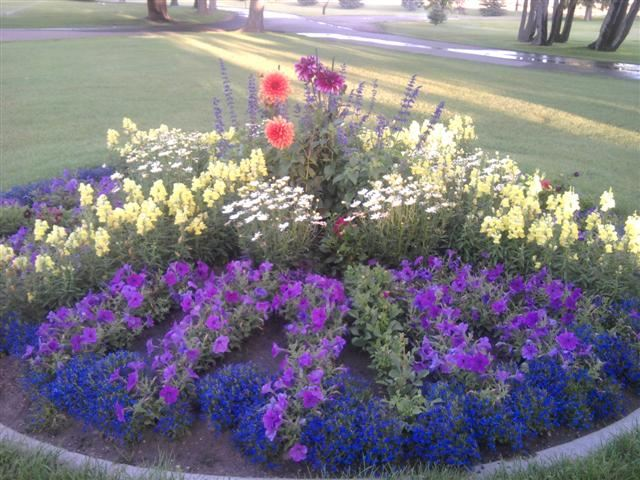 A round flower bed with purple and yellow flowers.