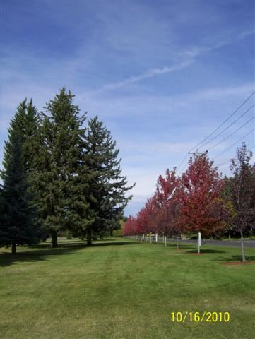 Two rows of trees. One group of trees are green and one group is red.