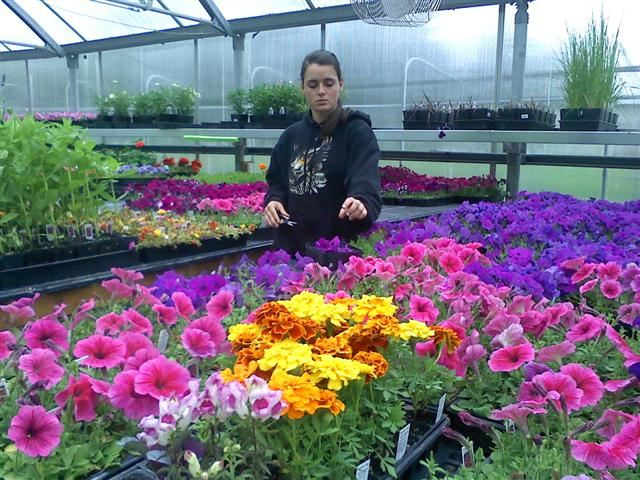 A woman working on flowers in a greenhouse.